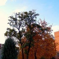 Осень :: Марина Валерьева