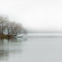 Туман в стиле ChillOut :: Дмитрий Стародубцев