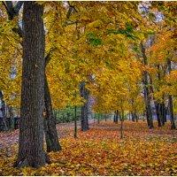Октябрь в парке :: Анатолий Михайлович