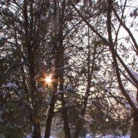 Зима в Каушанах :: Антон Б.
