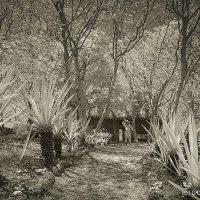 Старейший работник гасиенды Sotuda de Peon у хижины среди плантации хенекена - агавы. :: Игорь Яковлев