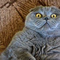 Один мой знакомый кот. :: Edward J.Berelet