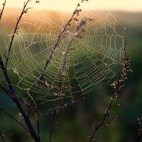 Ловило солнце в травах росы :: Александр | Матвей БЕЛЫЙ