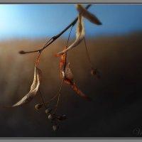 Липовый листик :: Валентин Цапков