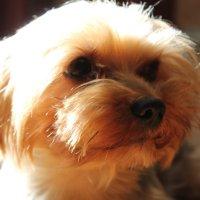 Сэми-чудо пёс :: Таисия Кириллова