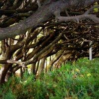 Сказочные деревья :: Lilek Pogorelova