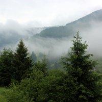 Утренний туман :: Татьяна