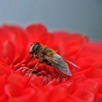 Worker Bee :: Roman Ilnytskyi