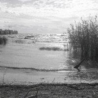 Белое озеро :: аннушка