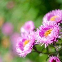 Осенние цветы :: Артем Василич