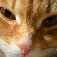 Кошка :: Екатерина В