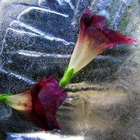 Забытые цветы :: Vladimir Shapoval