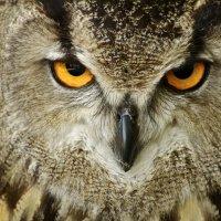Взгляд хищника :: MVMarina