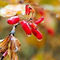 В предчувствии зимы... :: Елена Васильева