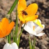 Цветы :: Анастасия Большакова