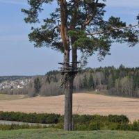 Природа в Беларуссии :: Ксения Юферева