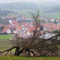 Дерево :: Georg Förderer