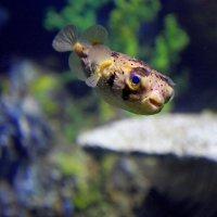 Рыбка :: Валерия Рябова