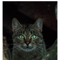 Еще кот :: Антон Куренков