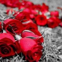 Розы на земле :: Valentina Privalova