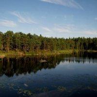 На озере :: Ольга Иргит