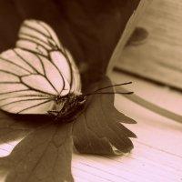 Бабочка :: Ксения Пискунова
