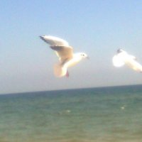 чайки :: Дарья Неживая