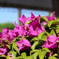 цветы. :: Евгения Гребенюк