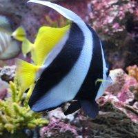 красотка аквариума :: Марианна Цветкова
