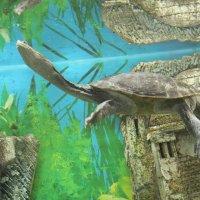 вот такая вот необычная черепаха :: Марианна Цветкова