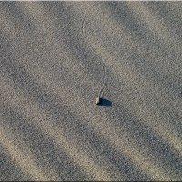 одинокая кибитка :: Алексей Сараев