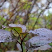 Дождь :: Кира К