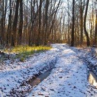 Прогулка по первому снегу. :: Сергей С.