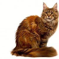 ....ну...кошка.... :: Александр    Swan Лебедев