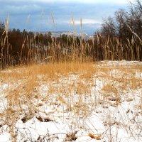 Колоски в снегу2 ! :: Алексей Медведев