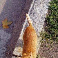Котик из Выборга :: vadim