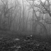 Туманный лес Чатыр-Дага :: Михаил Баевский