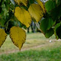Осень подползает... :: ФотоЛюбка *