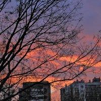 Добро утро ) :: Светлана З
