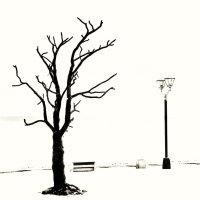 Дерево желаний. Петрозаводск.. :: Ed Peterson