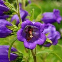 Пчелка Мая :: Umed Kholmatov