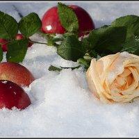 ЯБЛОКИ НА СНЕГУ :: ЛЮБОВЬ ВОЛГИНА