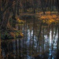 Пробуждение Весеннего леса :: Максим Минаков