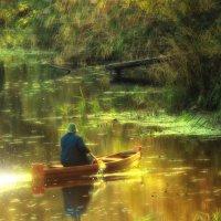 Золотая осень на реке Усманка :: Максим Минаков