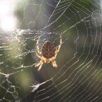 паук :: Андрей Петренко