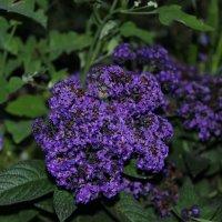 Цветы :: Вера Тумаева