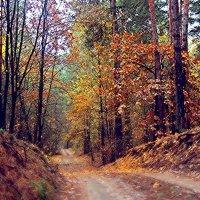 лес :: Ирина Руденко