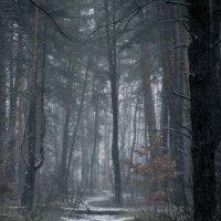 Зимний лес :: Максим Минаков