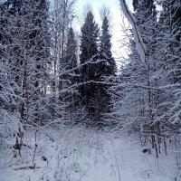 Лес. зима. :: warsarhiv 1939-1945