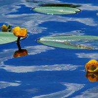 водоплавающие :: gribushko грибушко Николай